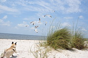 Gulf Of Mexico Photos - Chasing Gulls by Jan Amiss Photography