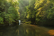 Bright Green Posters - Chattooga River at Dawn Poster by Matt Tilghman