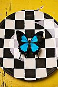 Blue Table Framed Prints - Checker plate and blue butterfly Framed Print by Garry Gay