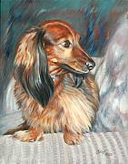 Dachshund Art Paintings - Cheech by Linda Eades Blackburn