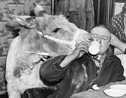 Cheeky Donkey Print by Fox Photos