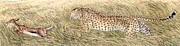 Cheetah And Gazelle Fawn Print by Tim McCarthy