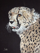 Cheetah Drawings Framed Prints - Cheetah Glory Framed Print by John Hebb