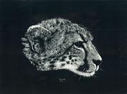 Seattle Drawings - Cheetah Head by Don Winsor