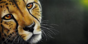 Wildlife Art Painting Posters - Cheetah Poster by Jurek Zamoyski