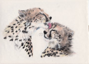 Cheetah Drawings Framed Prints - Cheetah Love Framed Print by Marqueta Graham