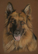 Retriever Pastels Posters - Chelsea - German Shepherd Poster by Sabine Lackner
