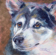 Husky Dog Paintings - Chelsea Husky Study by Kimberly Santini