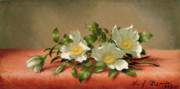 State Flowers Framed Prints - Cherokee Roses Framed Print by Martin Johnson Heade