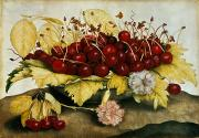 Plate Paintings - Cherries and Carnations by Giovanna Garzoni