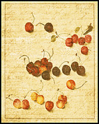 Red Cherries Framed Prints - Cherries Framed Print by Bonnie Bruno