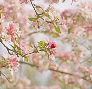 Pink Flower Branch Prints - Cherry Blossom Delight Print by Kim Hojnacki