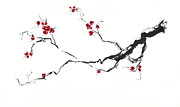 Indian Ink Painting Framed Prints - Cherry Blossom Framed Print by Jitka Krause