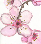 Cherry Blossoms Paintings - Cherry Blossom by Sheba Goldstein