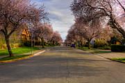 Matt Dobson - Cherry Blossom Street