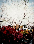 Terry Forrest - Cherry Blossom Trees in...