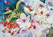 Cherry Blossoms Paintings - Cherry Blossoms- B by Diane Fujimoto