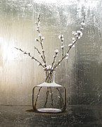 Silver Leaf Paintings - Cherry Blossoms by Judy Merrell
