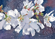 Cherry Tree Paintings - Cherry Blossoms by Marsha Elliott