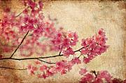Grunge Prints - Cherry Blossoms Print by Rich Leighton