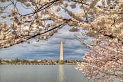 Cherry Blossoms Washington Dc 4 Print by Metro DC Photography