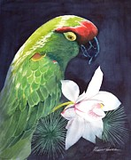 Parrot Paintings - Cherry Head by Robert Hooper