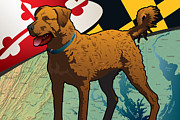 Retriever Digital Art - Chesapeake Bay Retriever of Maryland  by Joe Barsin