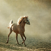 Dust Prints - Chestnut Arabian Horse Print by Christiana Stawski