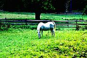 Stable Digital Art Framed Prints - Chestnut Hill Horse Framed Print by Bill Cannon