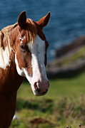 Young Horses Photos - Chestnut Mare  by Aidan Moran