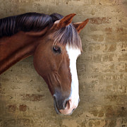 Sorrel Prints - Chestnut Pony Portrait Print by Ethiriel  Photography
