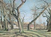 Autumn Woods Painting Prints - Chestnut Trees at Louveciennes Print by Camille Pissarro