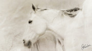 Cheval Prints - Cheval Blanc Print by Christine Hauber