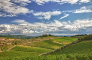 Chianti Tuscany Posters - Chianti Afternoon Poster by Eggers   Photography