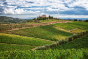 Chianti Photo Framed Prints - Chianti Landscape Framed Print by Eggers   Photography