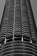 Chicago Black White Framed Prints - Chicago Corn Framed Print by Miranda  Miranda