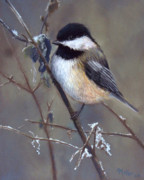 Song Pastels - Chickadee and Icicles by Marcus Moller