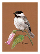 Chickadee Pastels Framed Prints - Chickadee Framed Print by Jeff Conway