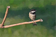 Photomanipulation Photo Prints - Chickadee on a stick Print by Debbie Portwood