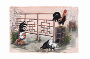 Watercolor Roosters Framed Prints - Chickens at the Gate Framed Print by Nancy Pahl