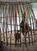 Makeshift Framed Prints - Chickens in Bamboo Cage Framed Print by David Buffington