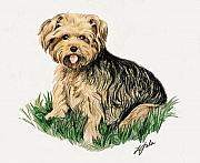 Yorkie Drawings - Chico by Linda Sala