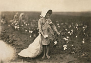 1910s Metal Prints - Child Labor, A Young Girl Picking Metal Print by Everett