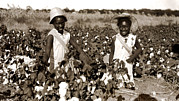 Black History Art - Children Picking Cotton, Late 1800s by Everett