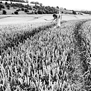 Children Photos - #children #running In A #cornfield by Nikki Sheppard