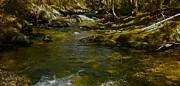 Dappled Light Framed Prints - Childs Brook A Framed Print by George Ramos
