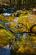 Dappled Light Photos - Childs Brook D by George Ramos