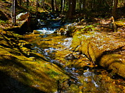 Dappled Light Framed Prints - Childs Brook E Framed Print by George Ramos