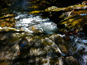Dappled Light Photos - Childs Brook Half Light 2 by George Ramos