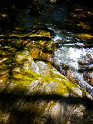 Dappled Light Photos - Childs Brook Half Light 3 by George Ramos